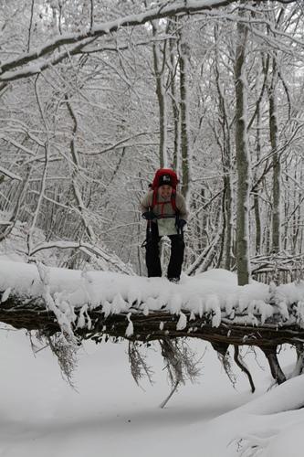 Tronc d'arbre au milieu du chemin