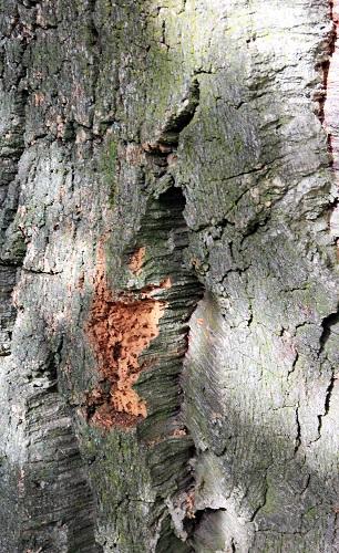 Tronc de chêne liège : du bouchon 100% naturel !