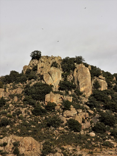 Les vautours tournoient depuis l'éperon rocheux